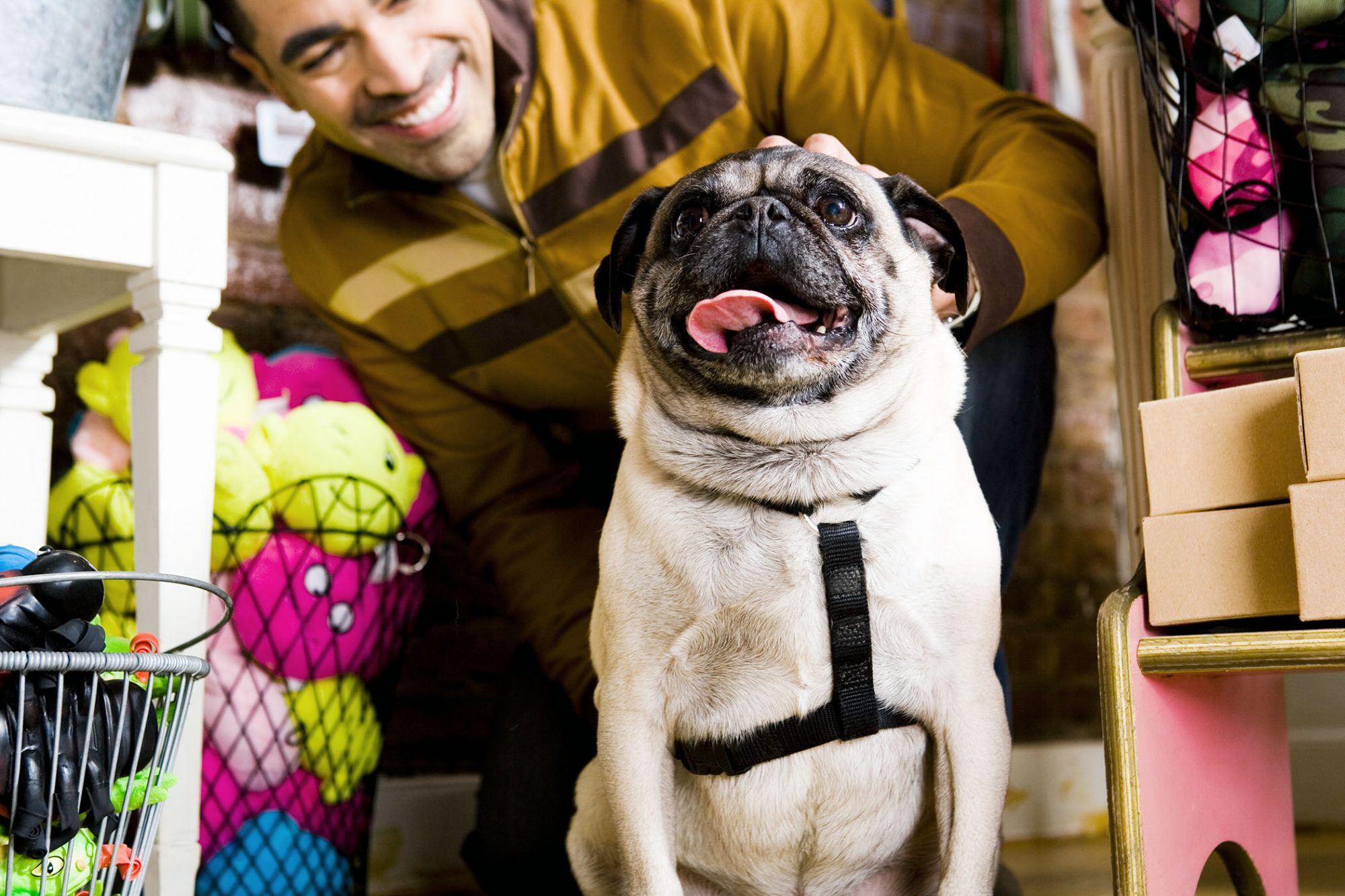 pug with owner in pet shop