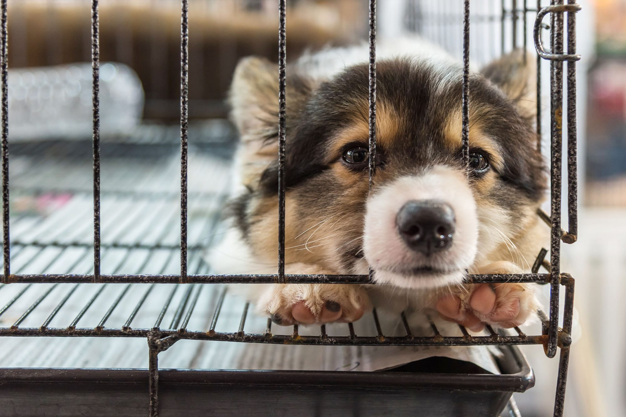 sad puppy sitting in stacked wire cage