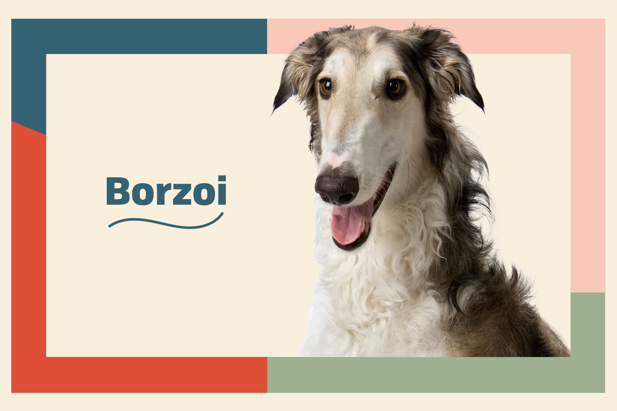Borzoi Breed Photo