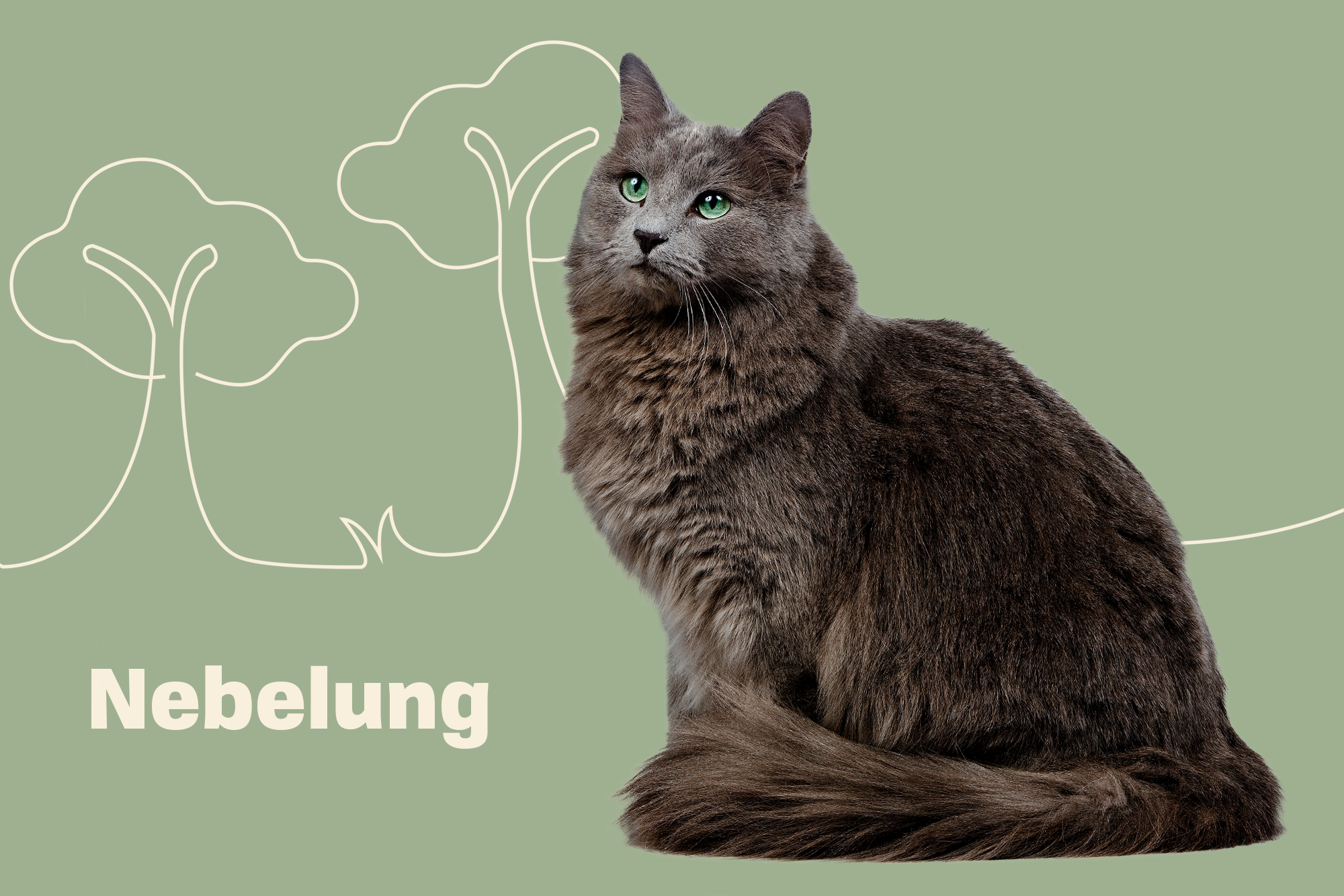 Nebelung Breed Photo