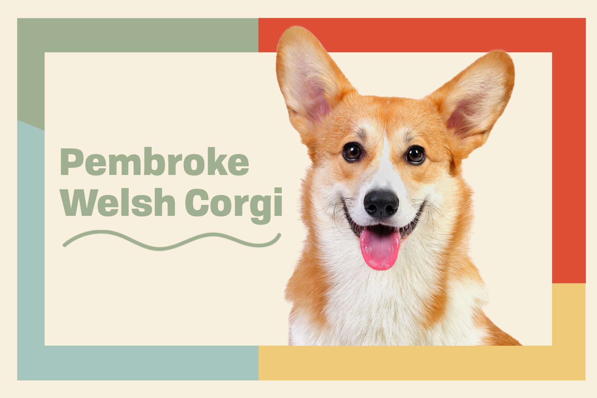 Pembroke Welsh Corgi Breed Photo