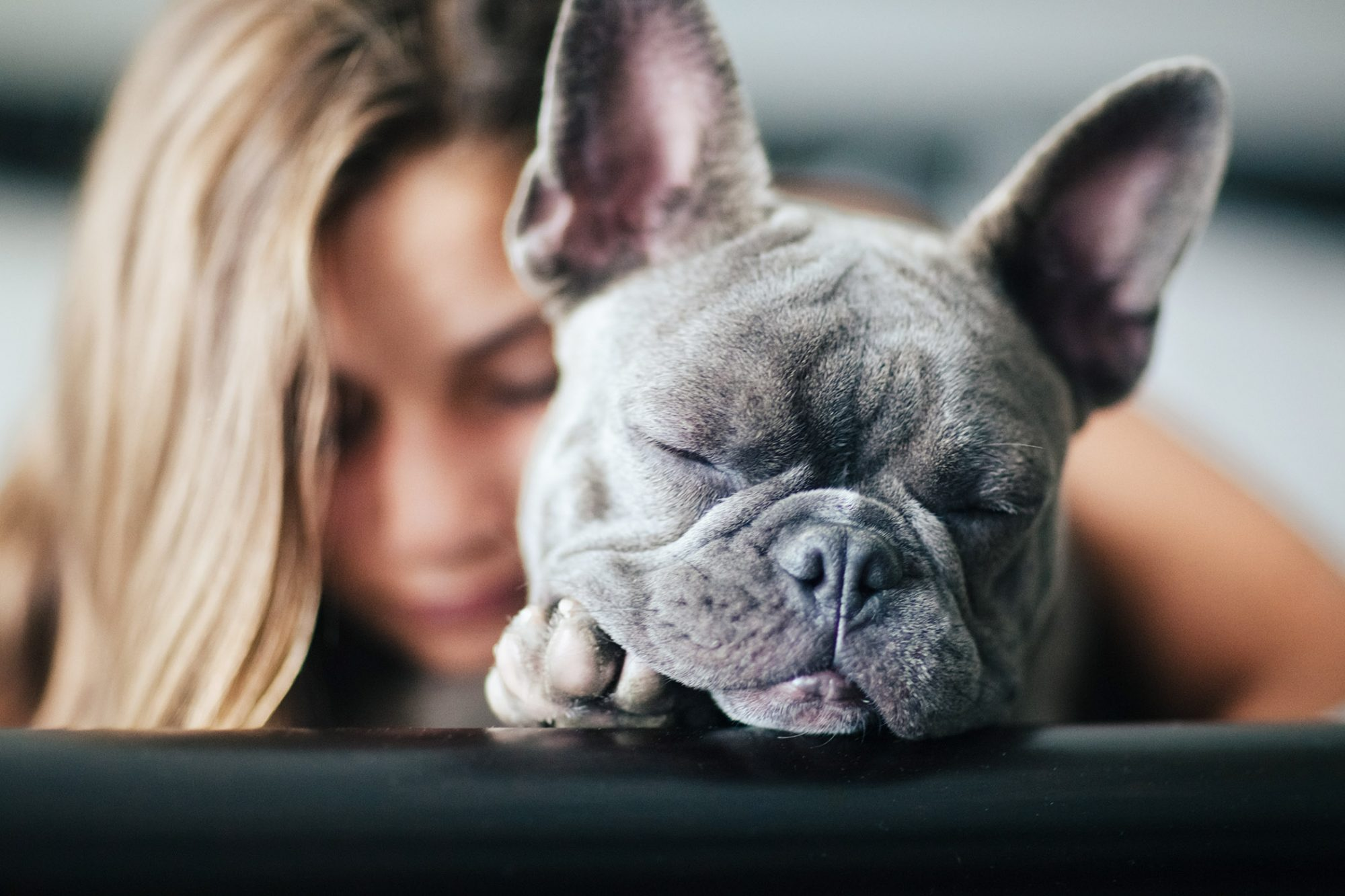 gray french bulldog snuggling with young girl