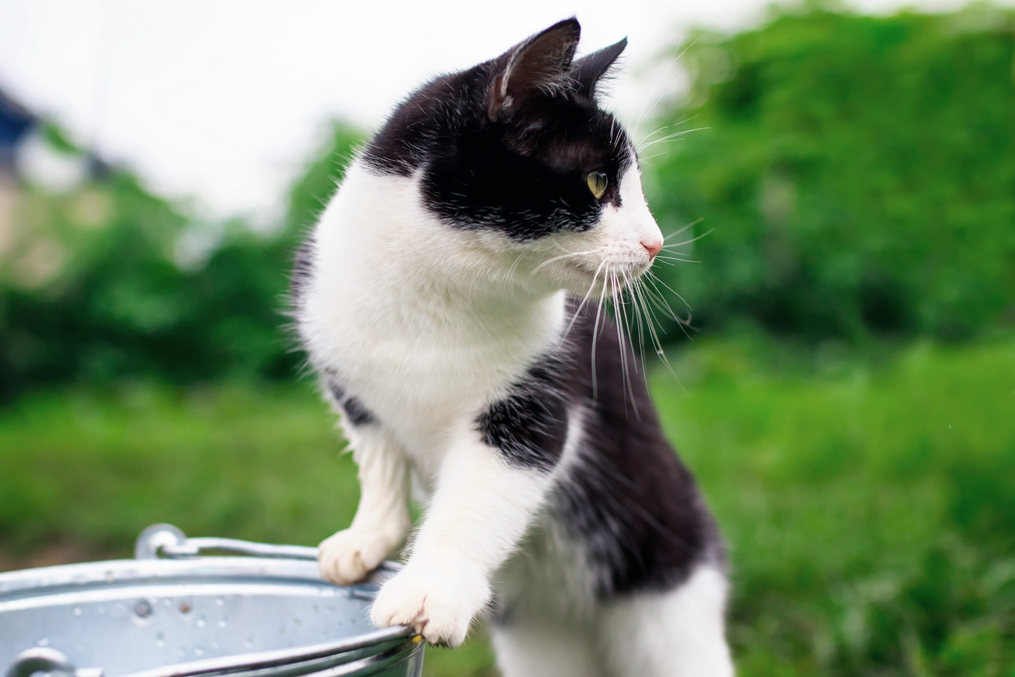 black-and-white cat standing near bucket