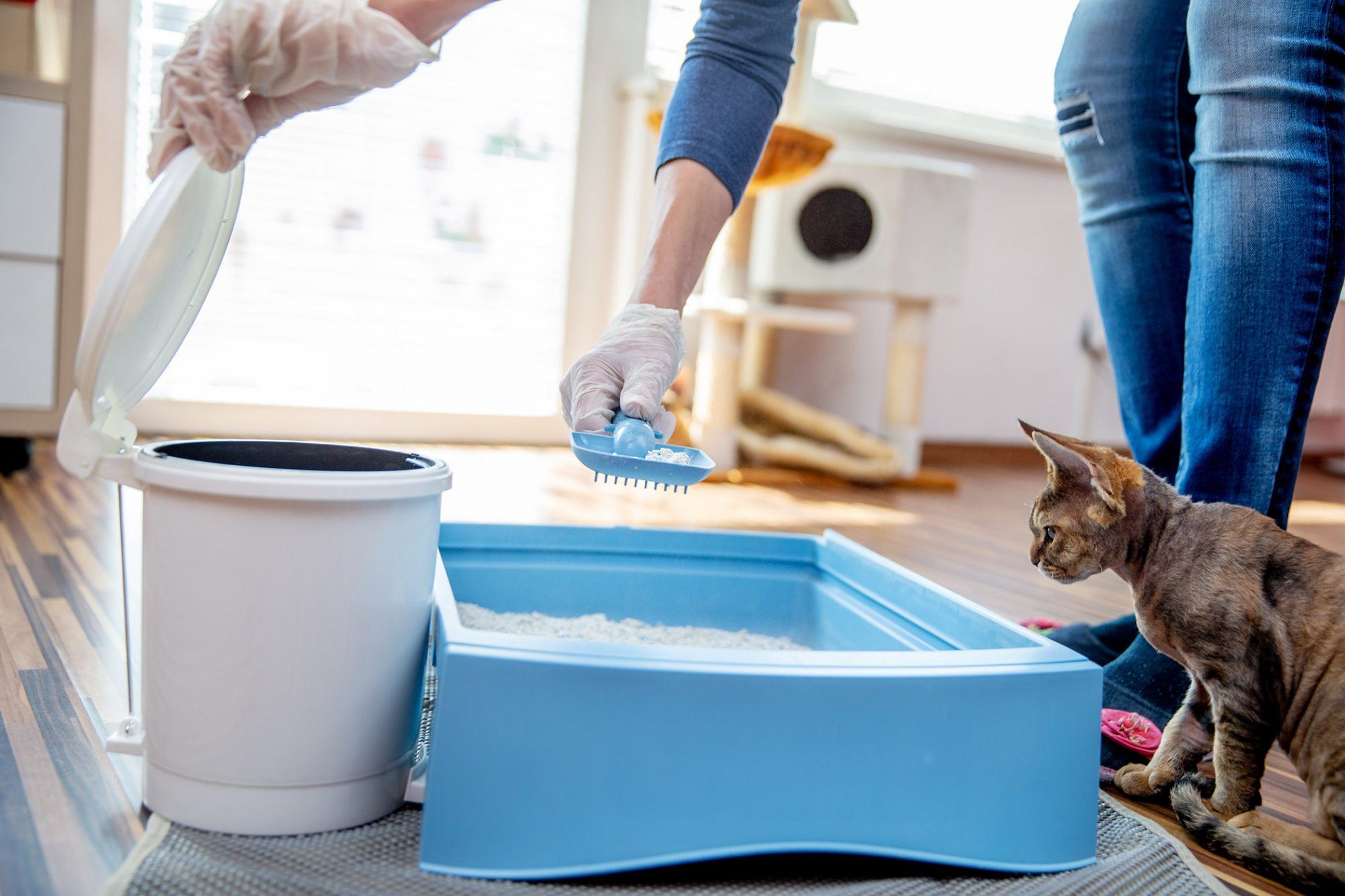 woman cleaning out litter box