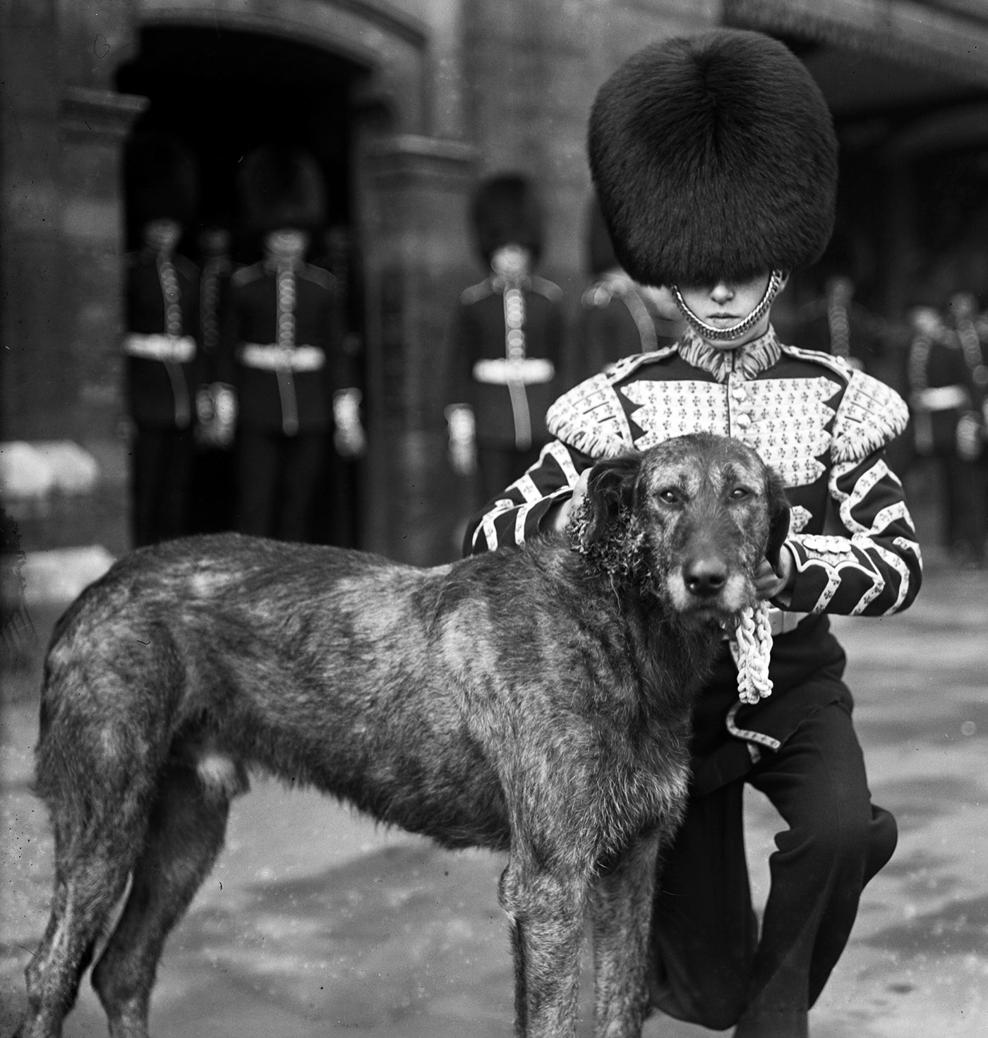 irish wolfhound posing with soldier for st. patrick's day parade