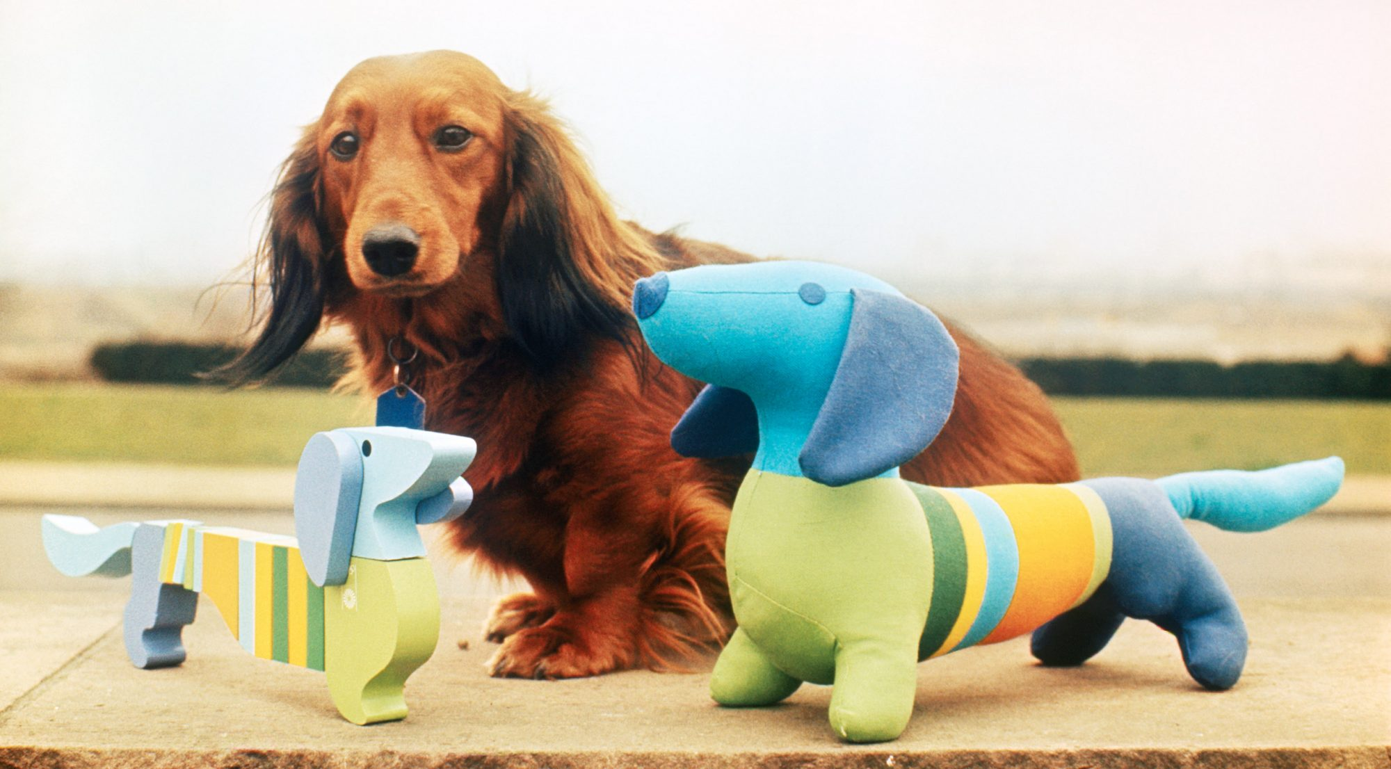 daschund posing with toy versions of Waldi the Olympic mascot