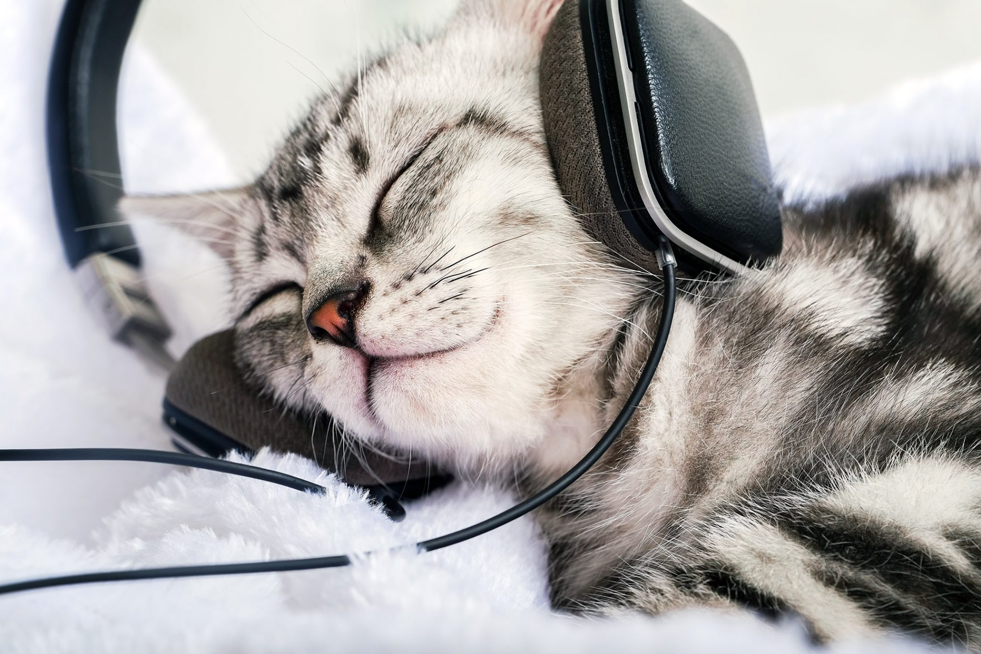 relaxed cat wearing headphones