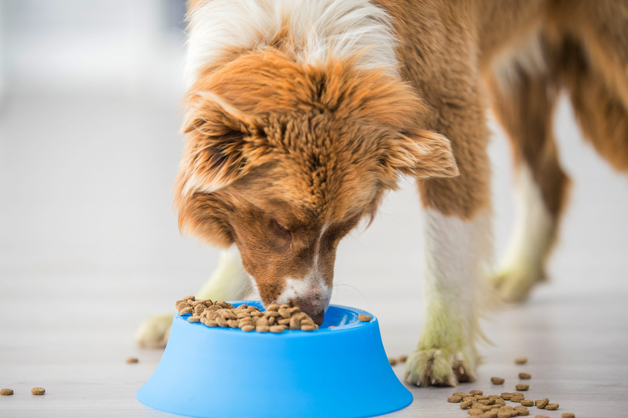 dog eating out of overflowing bowl