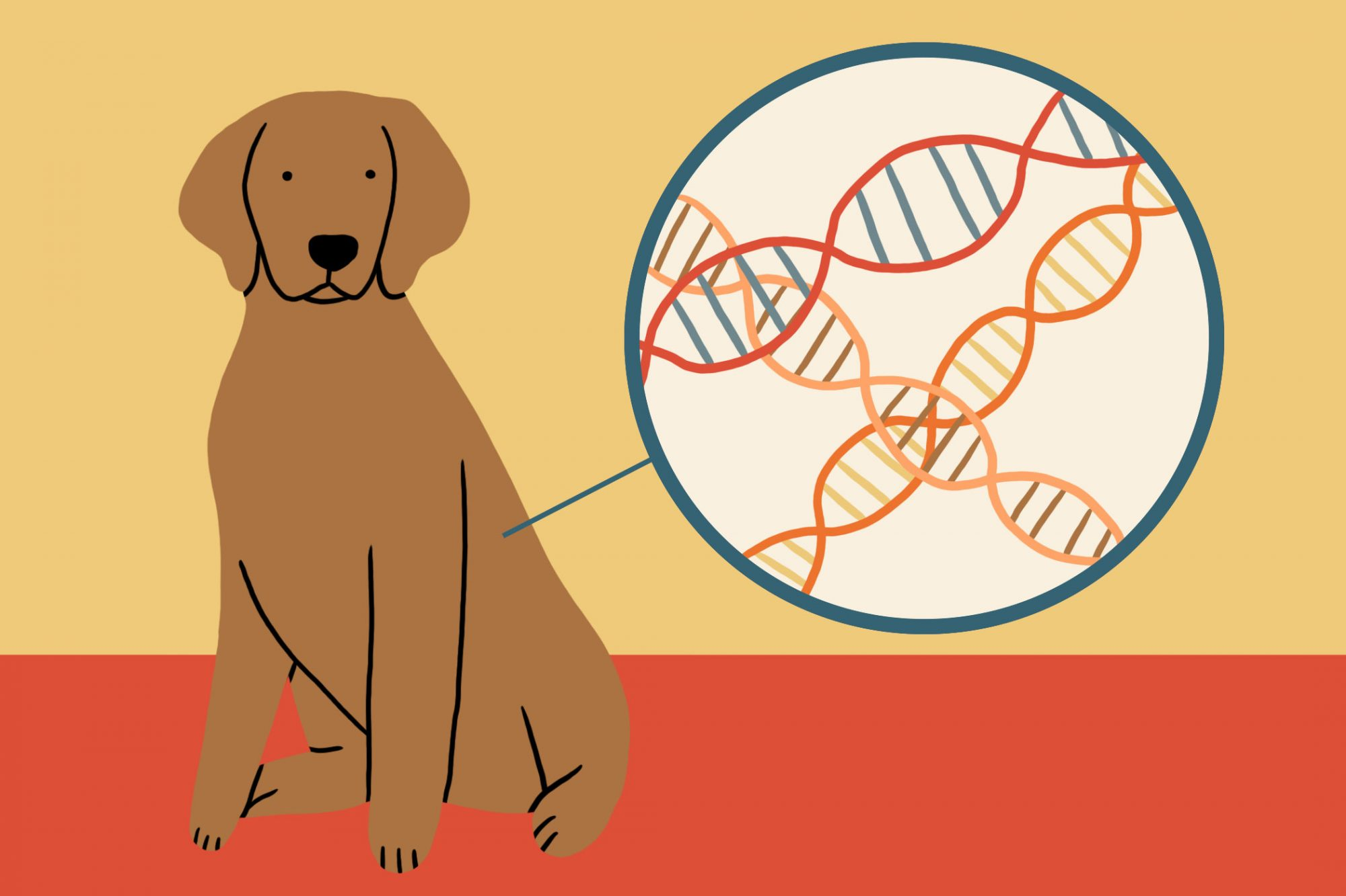 illustration of dog with DNA helix