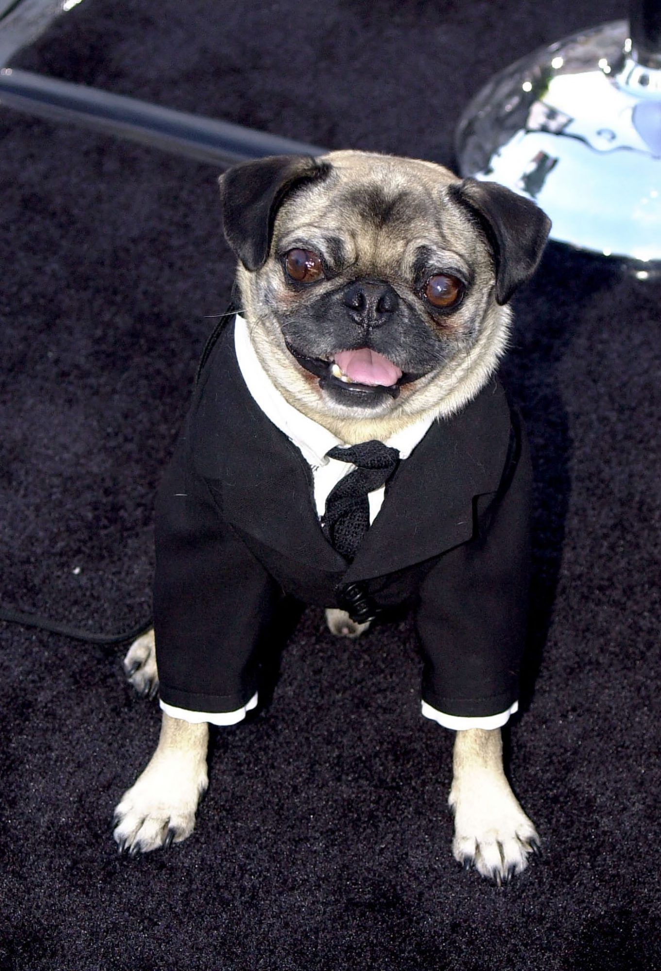 frank the pug from men in black 2