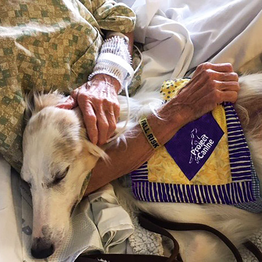 Therapy dog comforting hospital patient during a bed visit