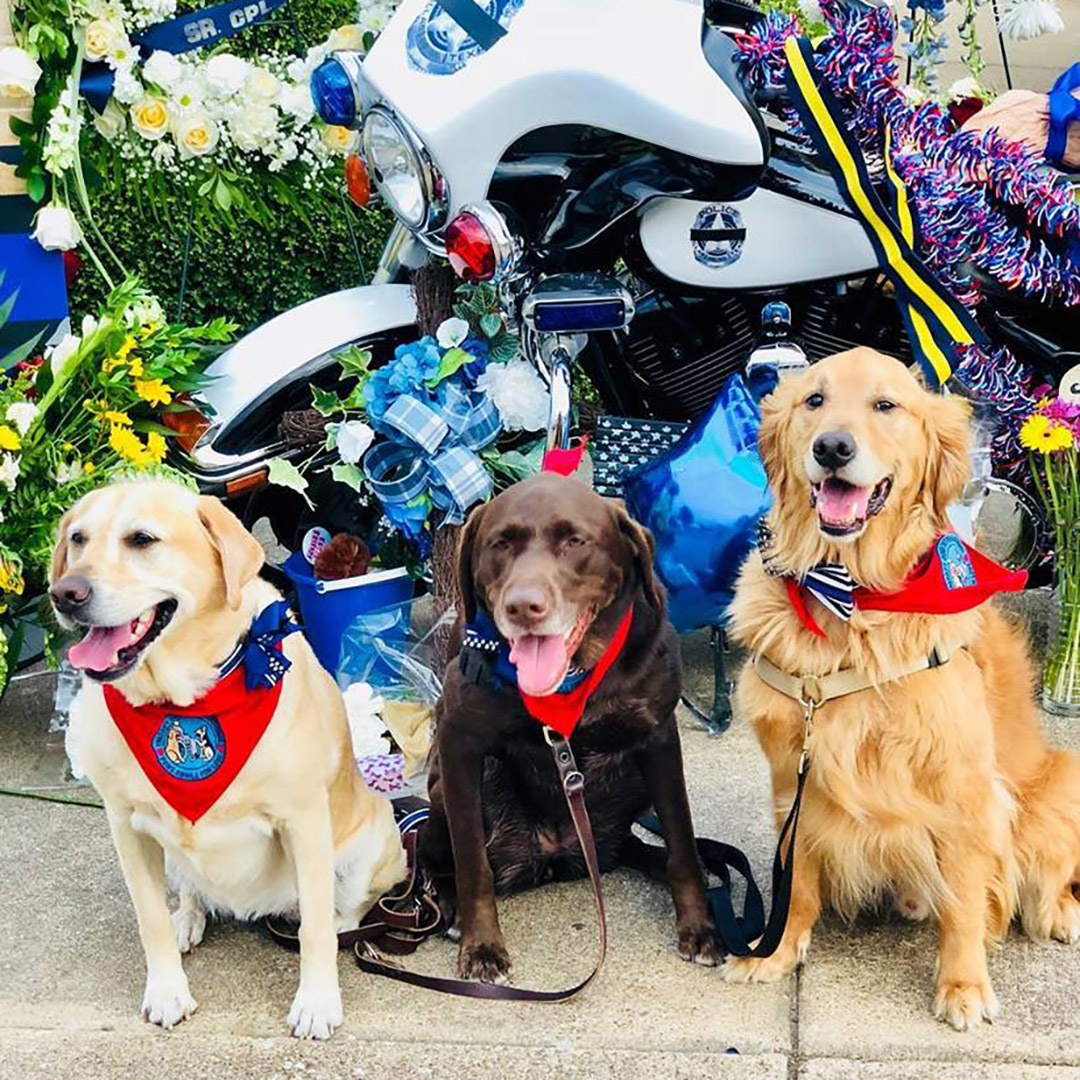 Group of therapy dogs sit at a memorial for a fallen police officer