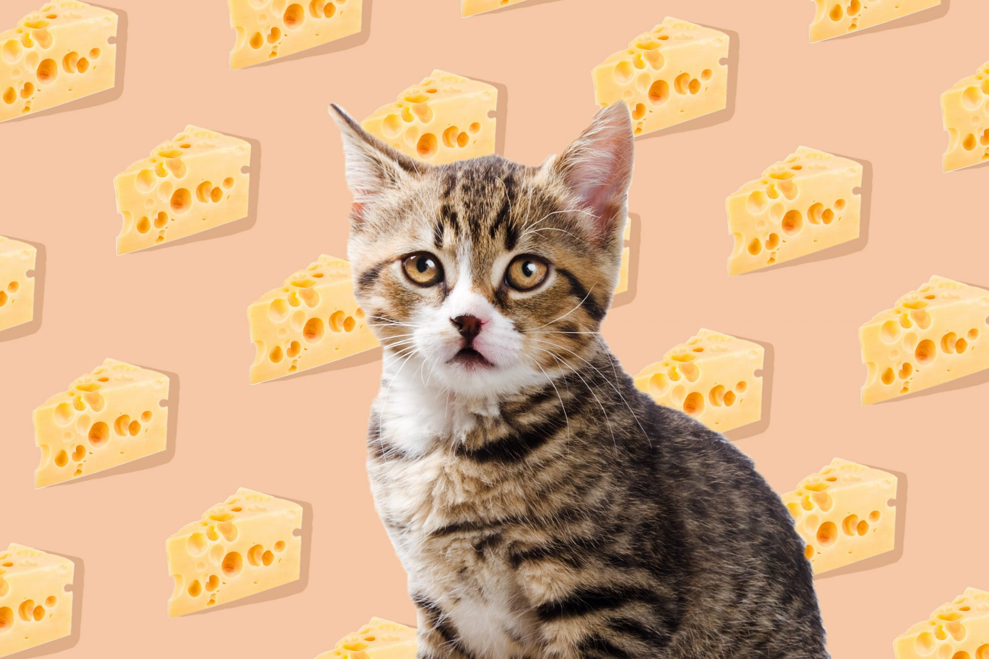 Cat with cheese pattern in background