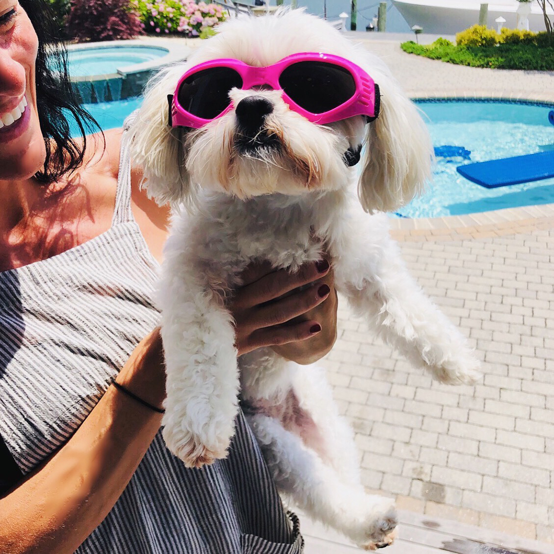 Small white dog in goggles by pool