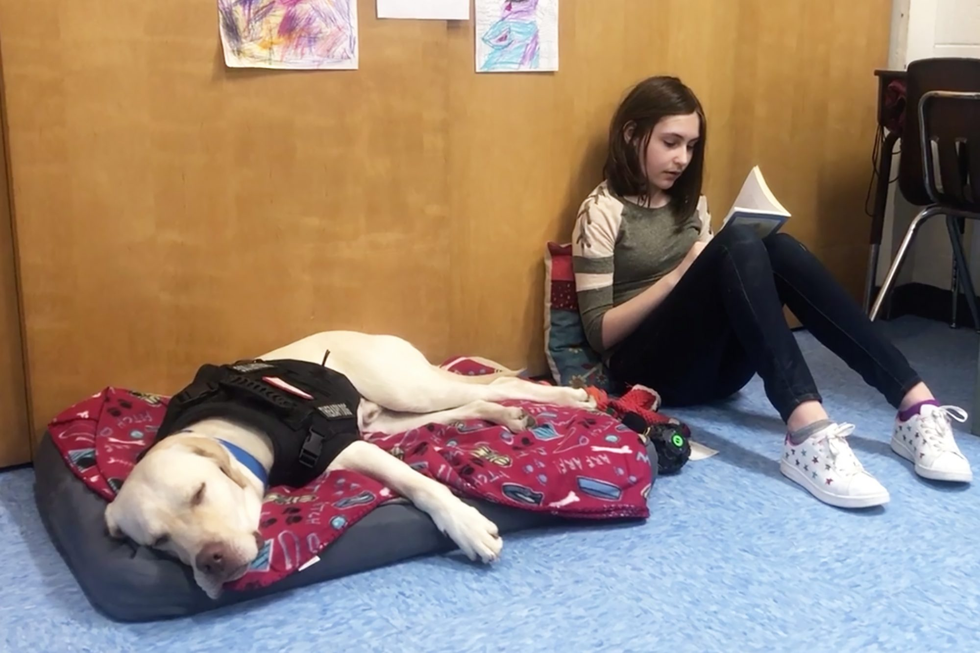 Lucky the three-legged therapy dog provides comfort to reading student