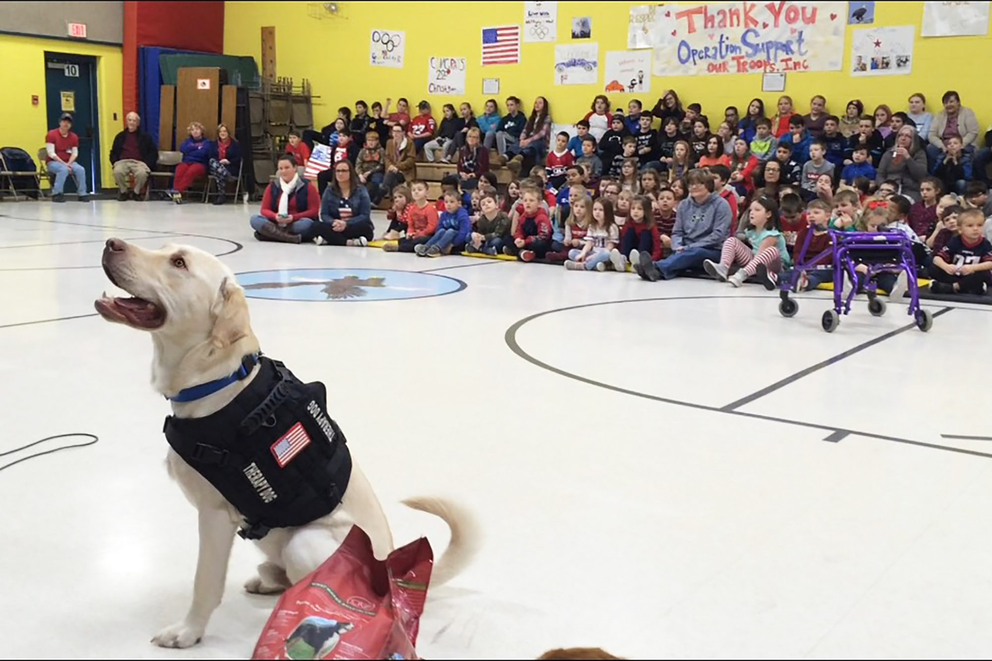 Lucky the three-legged therapy dog at an assembly of students at Leeds Elementary.