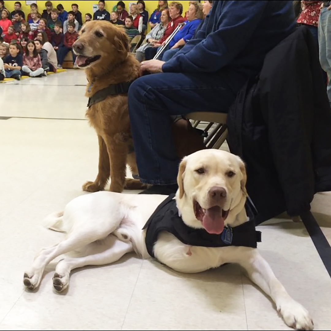 Lucky the three-legged therapy dog sitting in the school gym