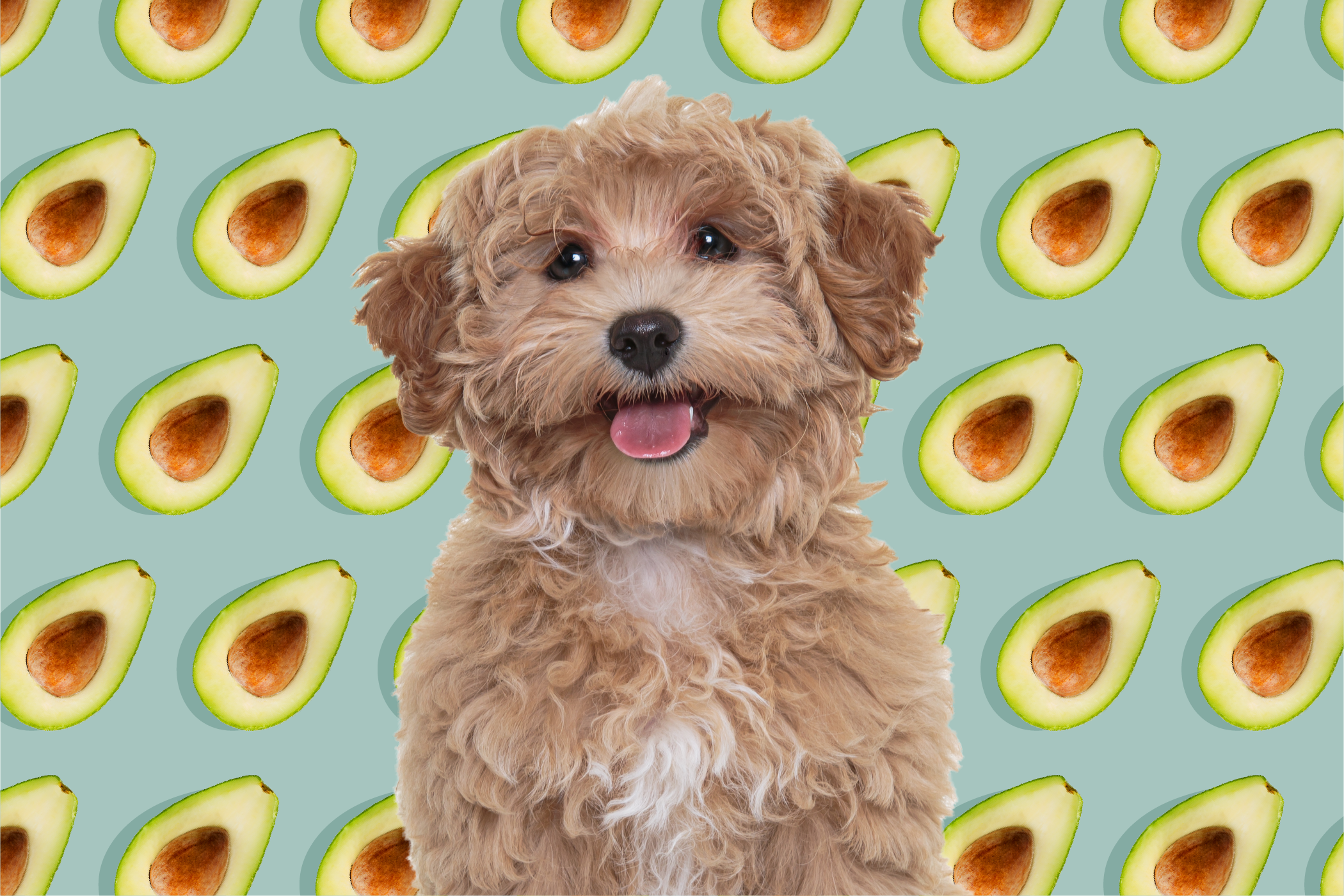 dog with avocado pattern in background