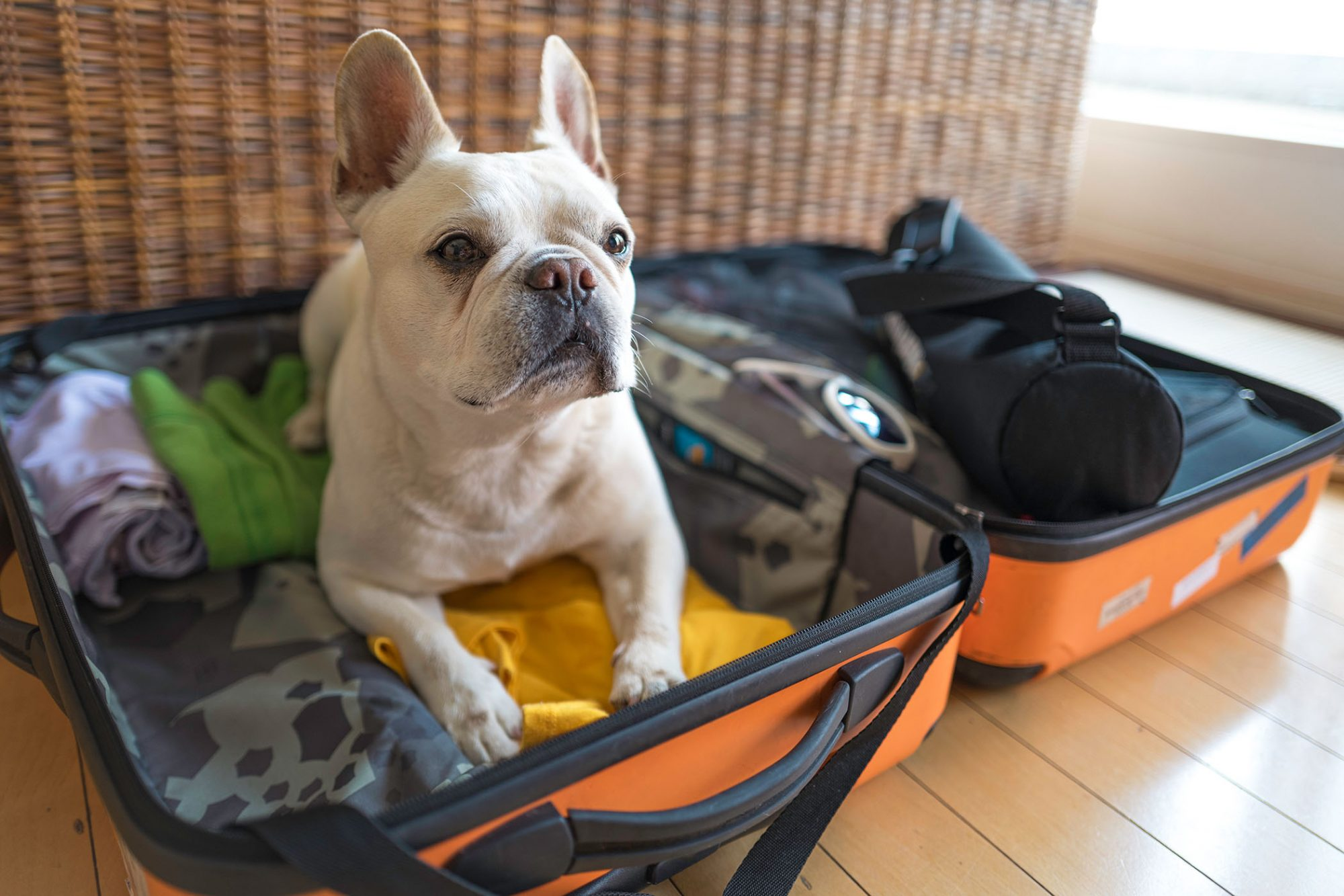 dog on packed clothes in a suitcase