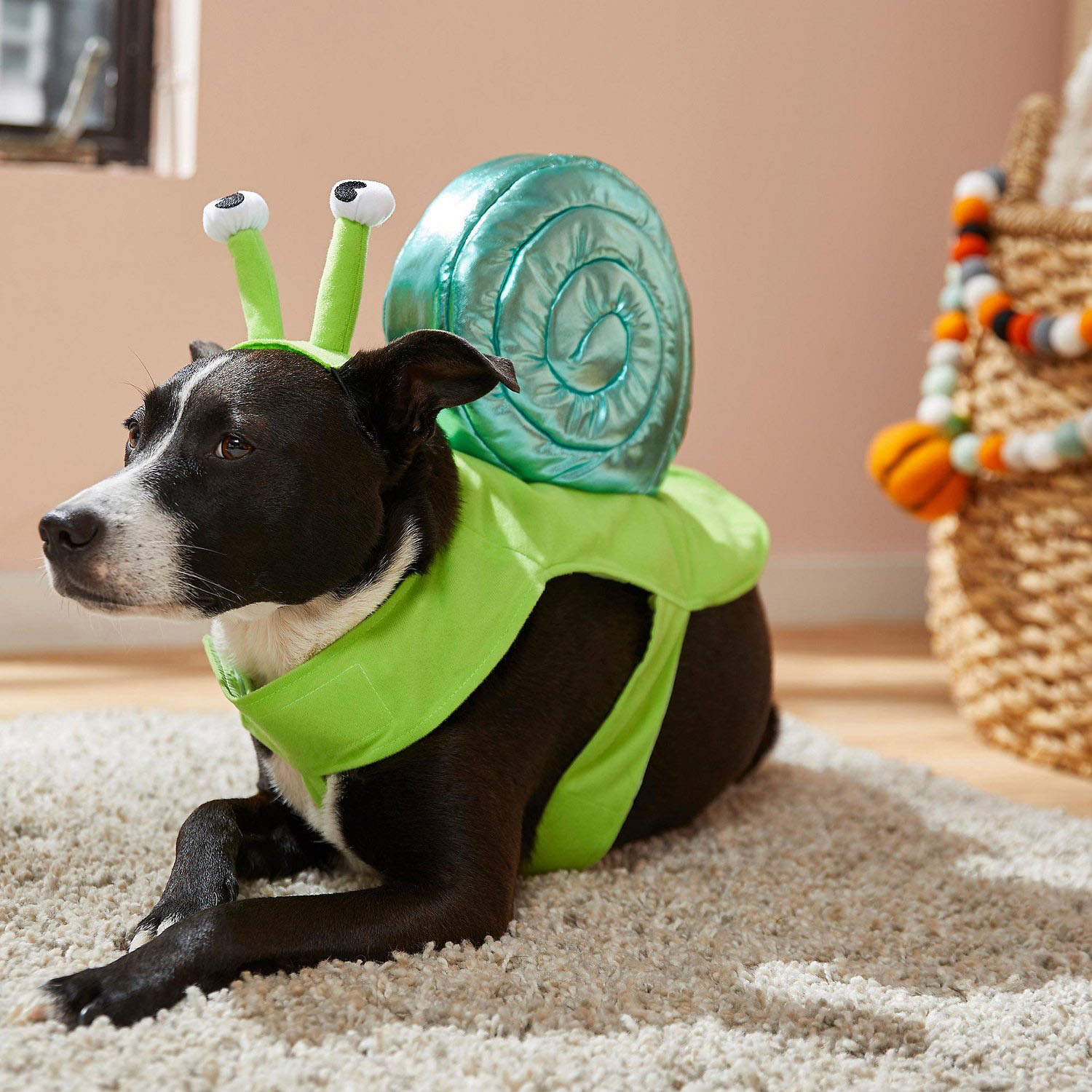 snail dog costume