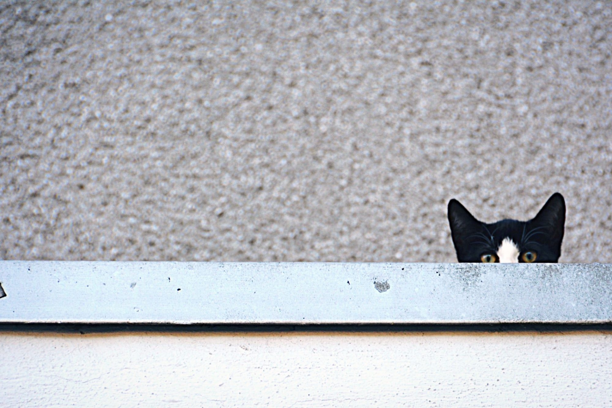 black and white cat peeking over ledge