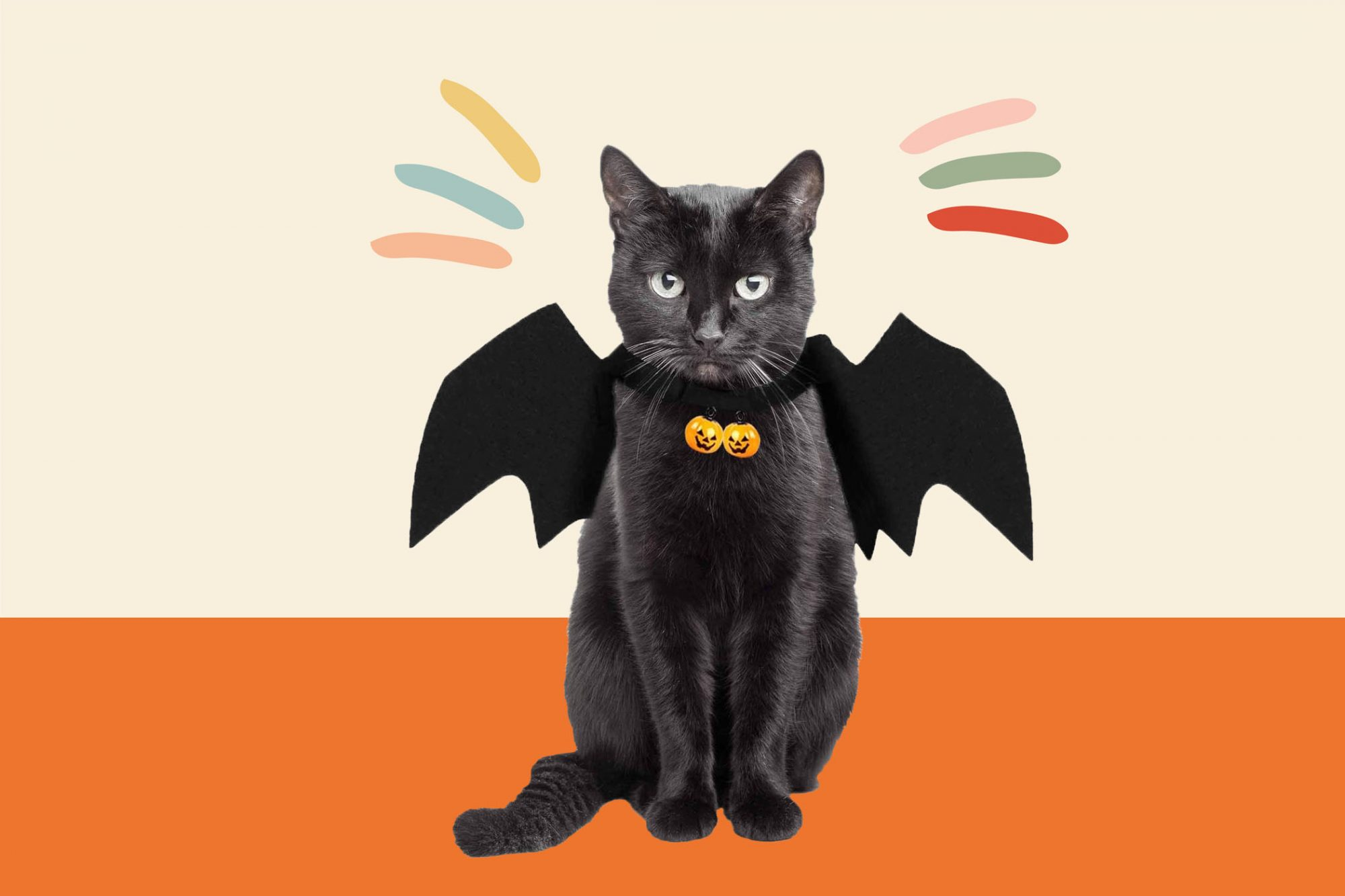 bat pet halloween costume for cat