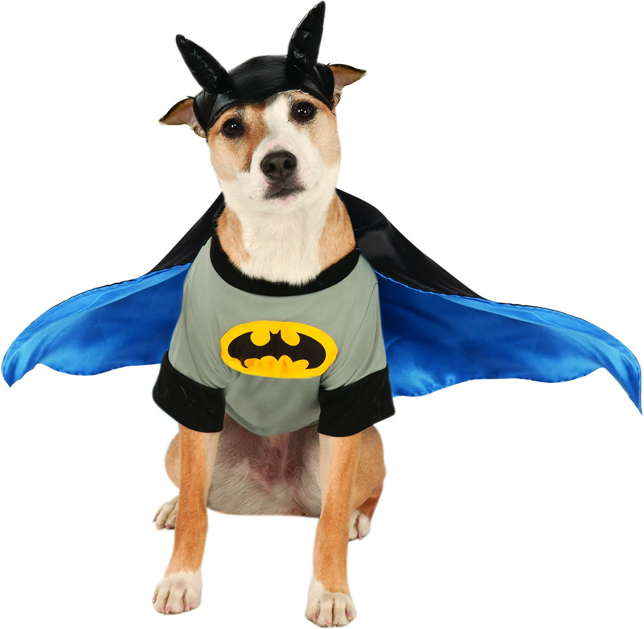 Batman Halloween costume for dogs and cats
