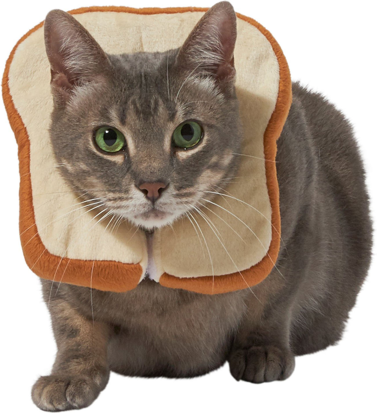 Cat breading Halloween costume for pets