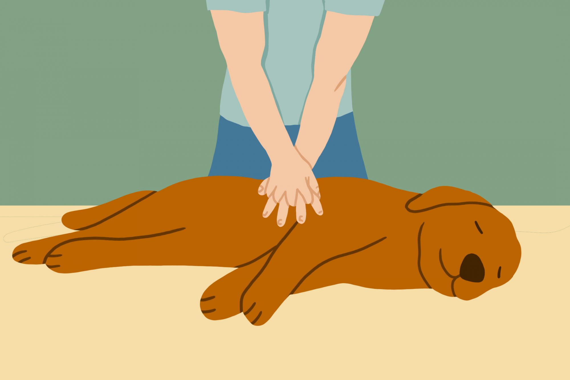 illustration of person performing CPR on a dog