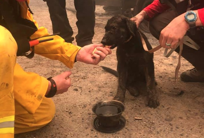 Puppy rescued from wildfire
