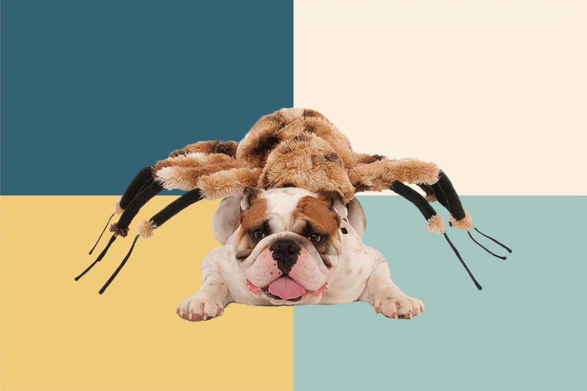 spider costume for dog