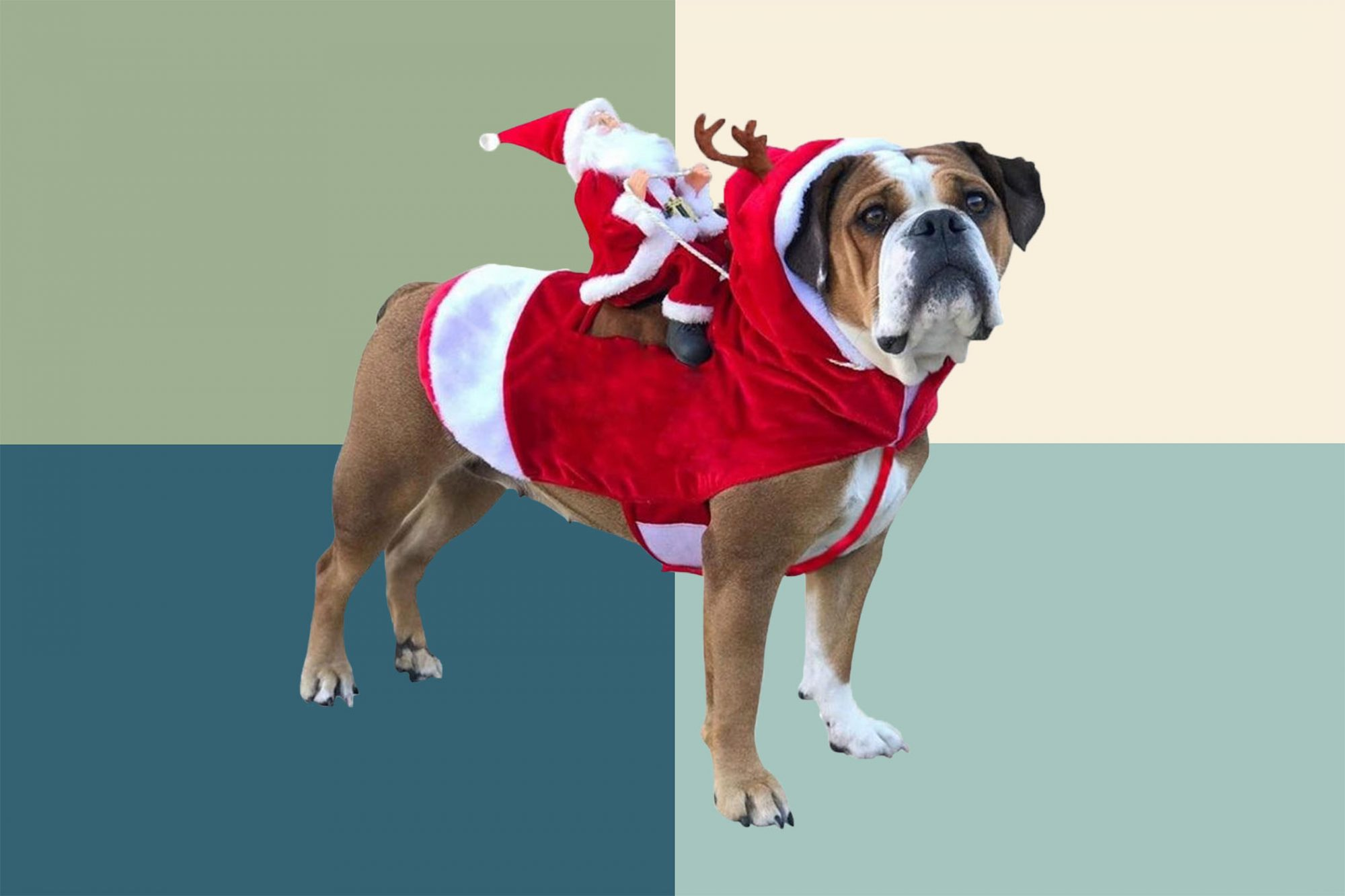 dog in Santa Christmas sweater