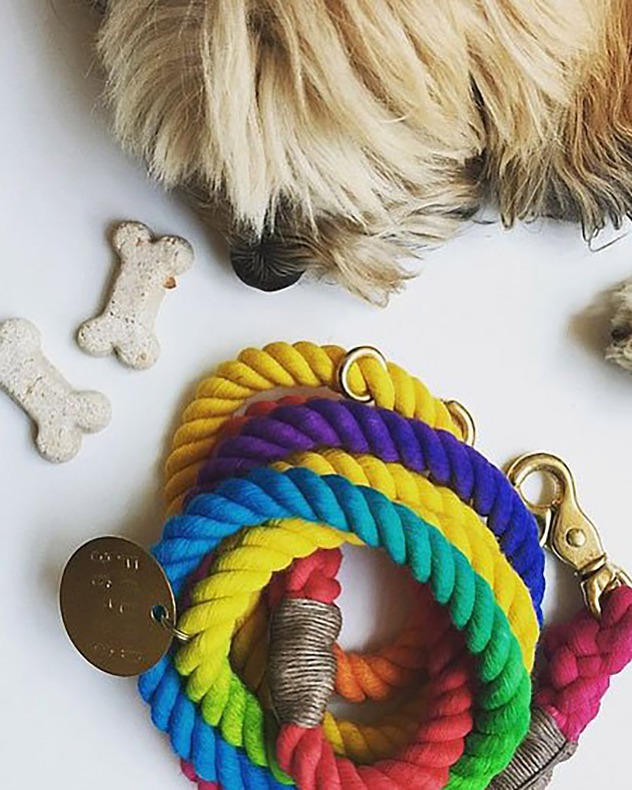 Multi-color adjustable Found My Animal dog leash in rainbow color next to dog nose