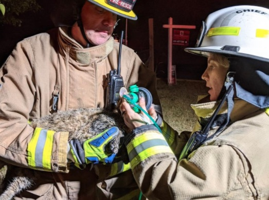 firefighters give cat oxygen