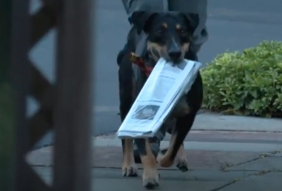 dog carries newspaper on path