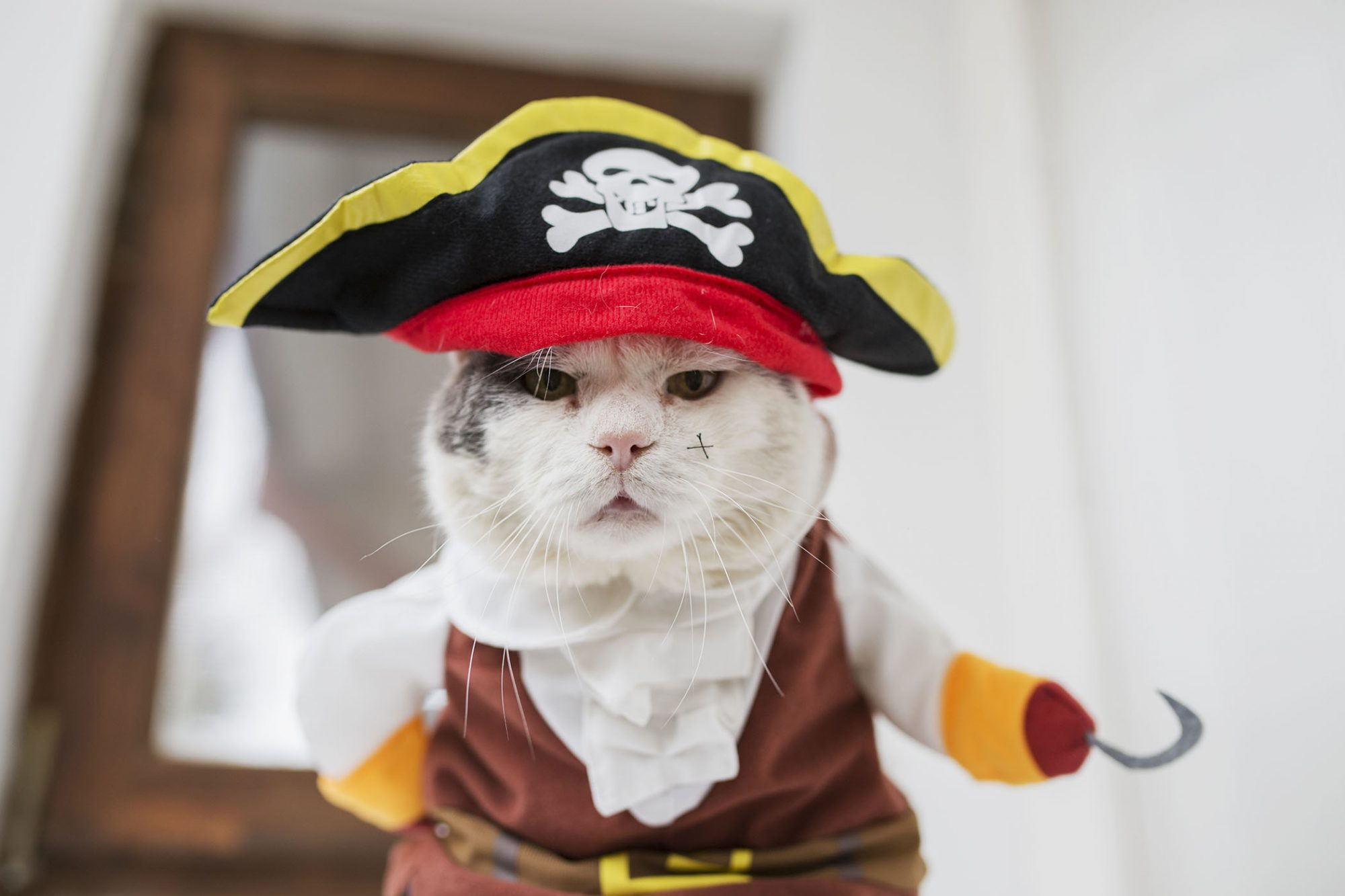 cat in pirate costume