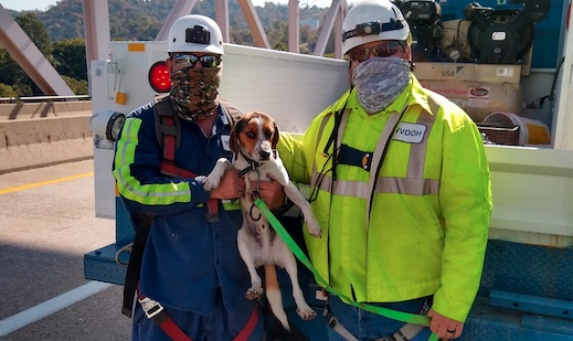 bridge workers hold dogs