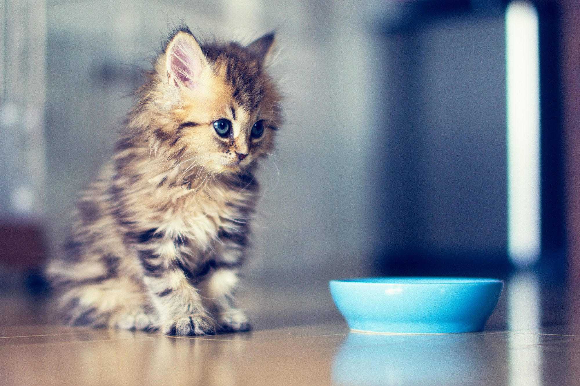 Milk Formula Or Food Here S What To Feed Your Kitten During The First Year Daily Paws