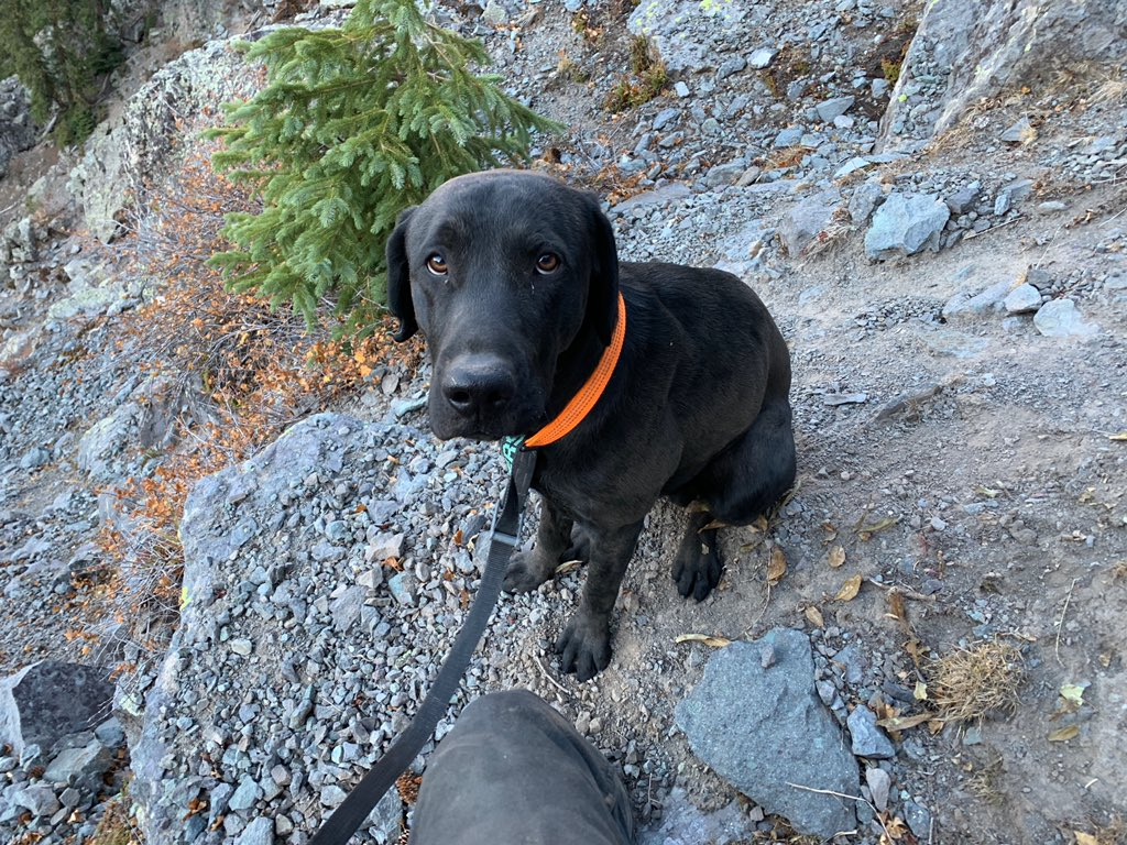 black dog sitting in mountains