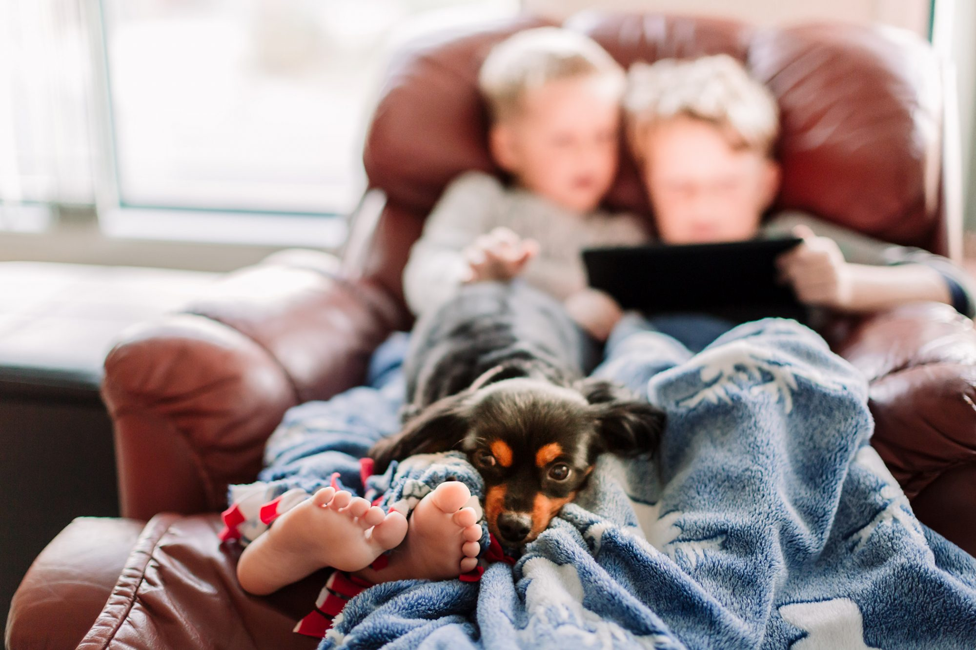 dog on recliner with kids