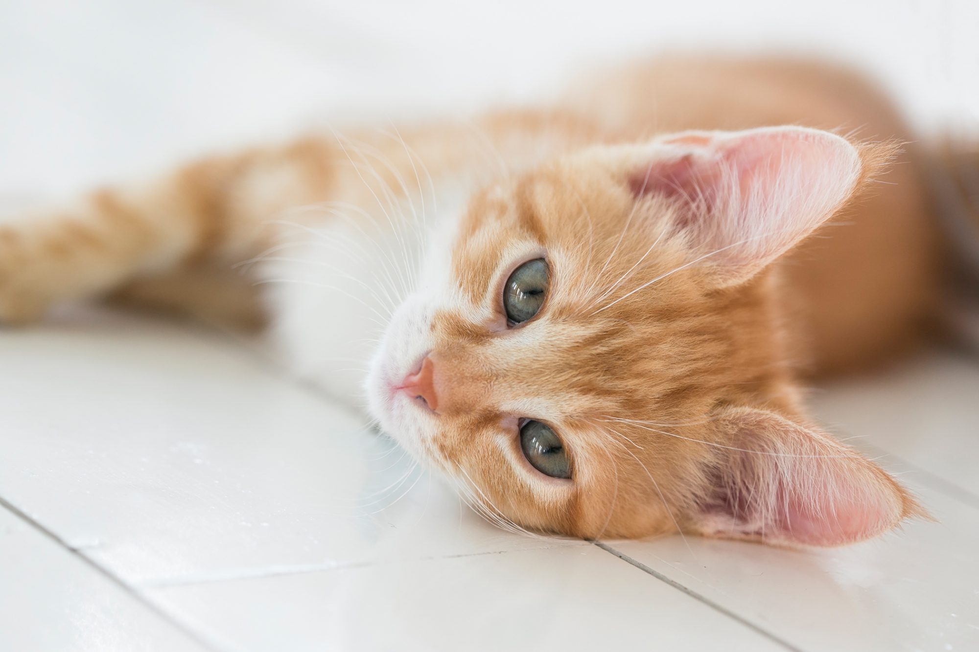 one-year-old cat laying on the floor