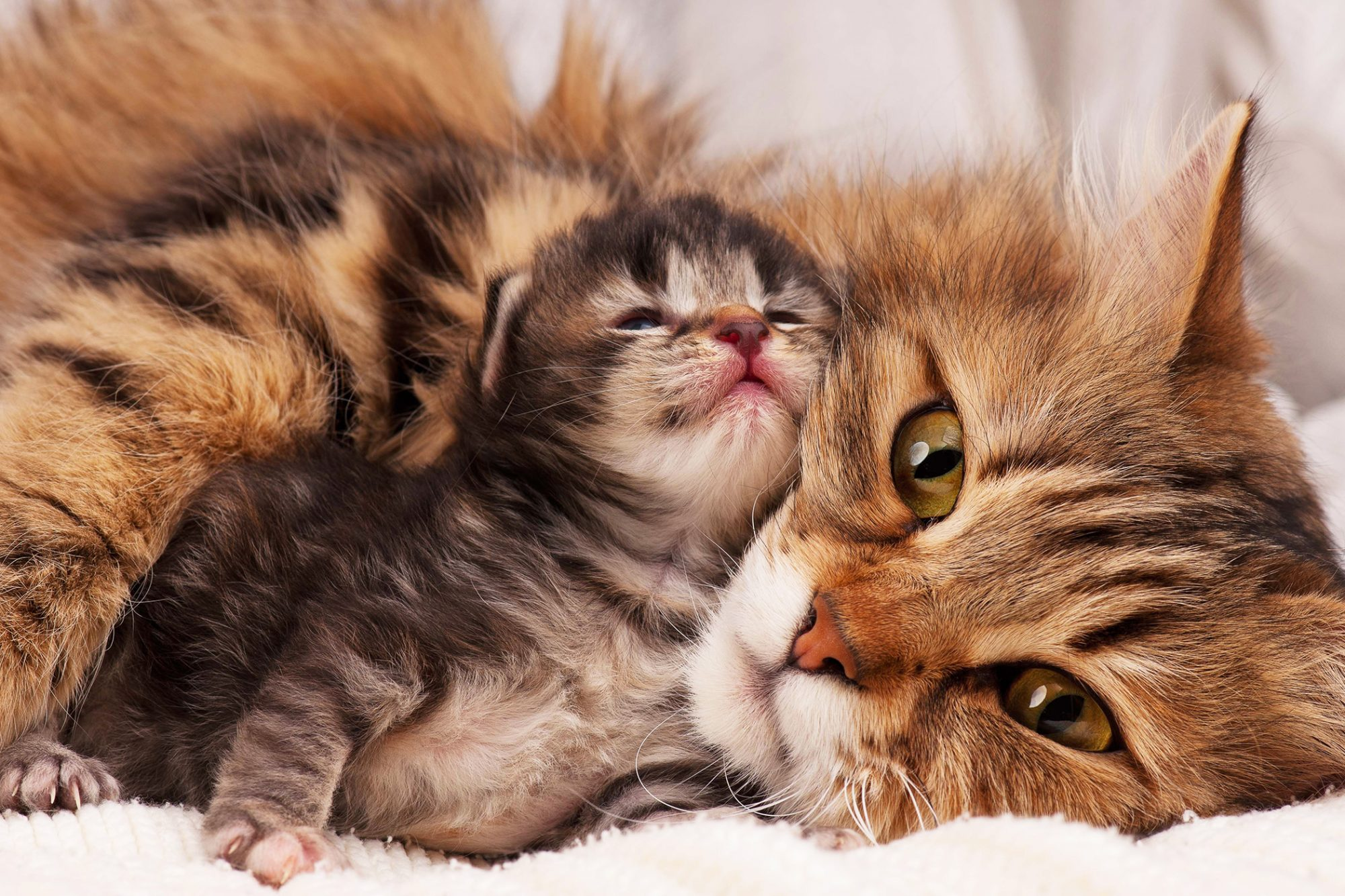three to ten-day-old kitten with his mama