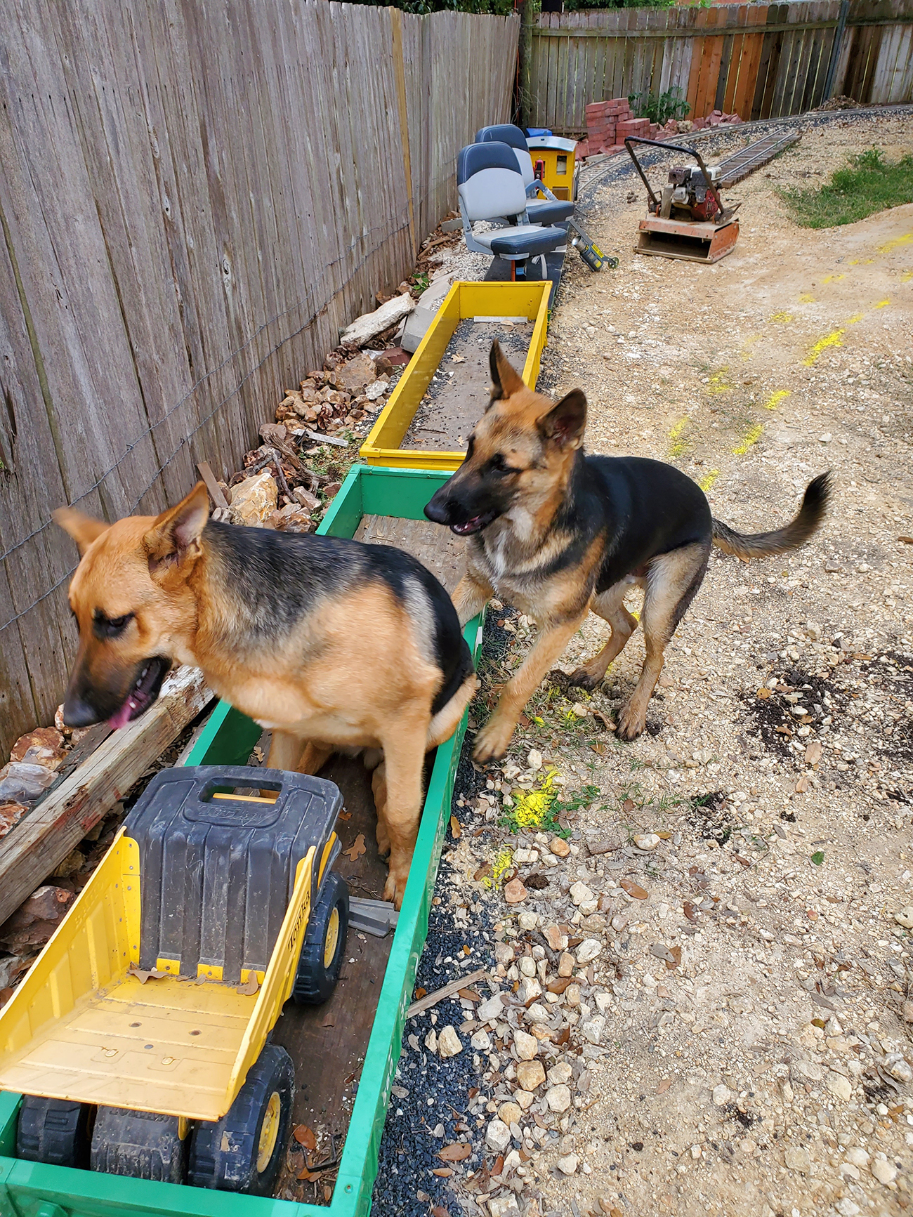 two dogs climbing into green box car