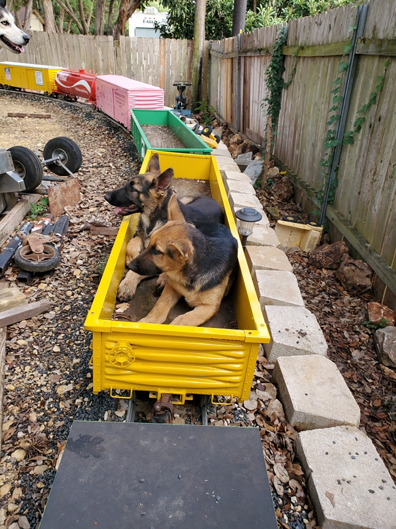 two dogs in yellow box car