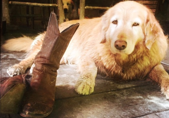 dog lays on floor next to boots