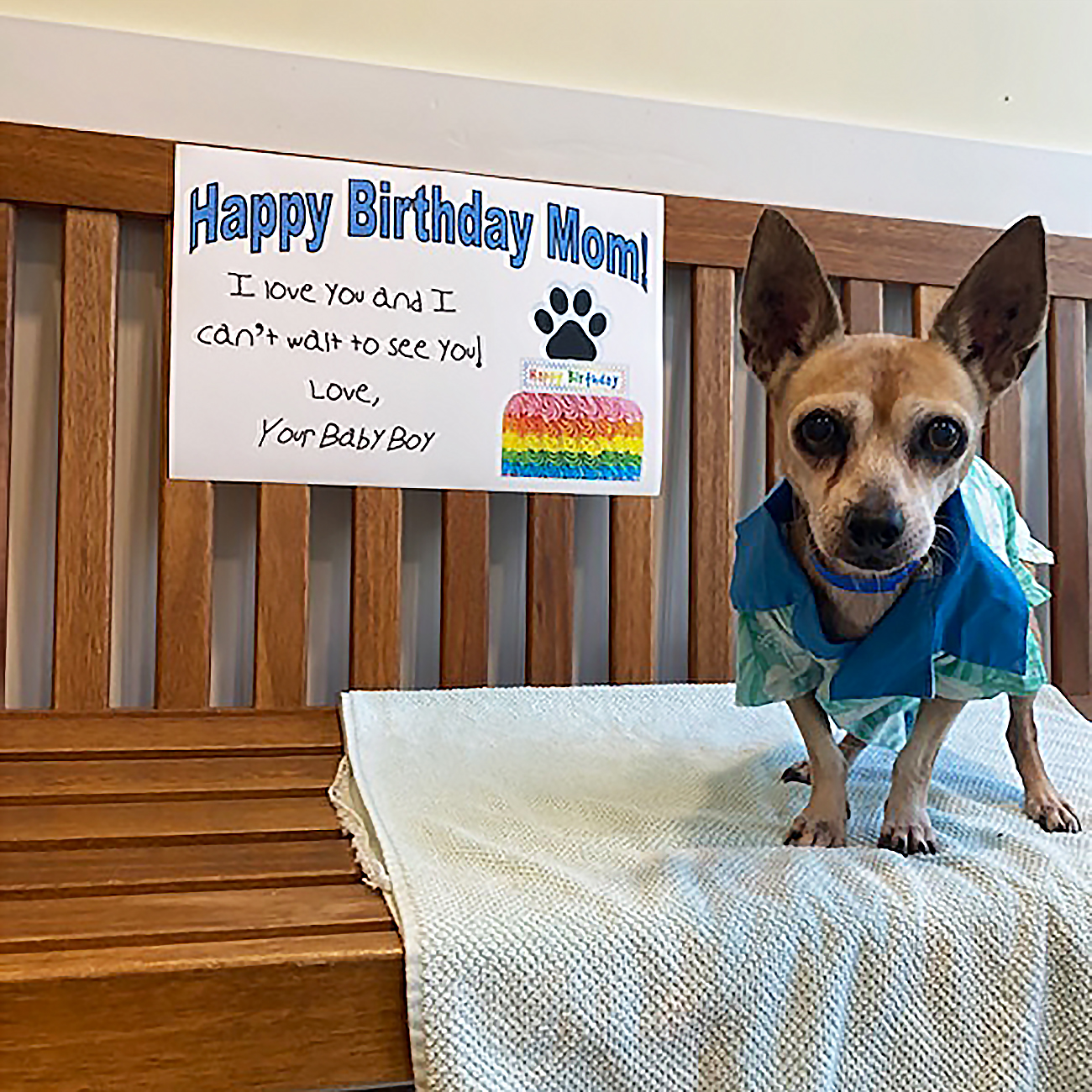 dog with birthday poster