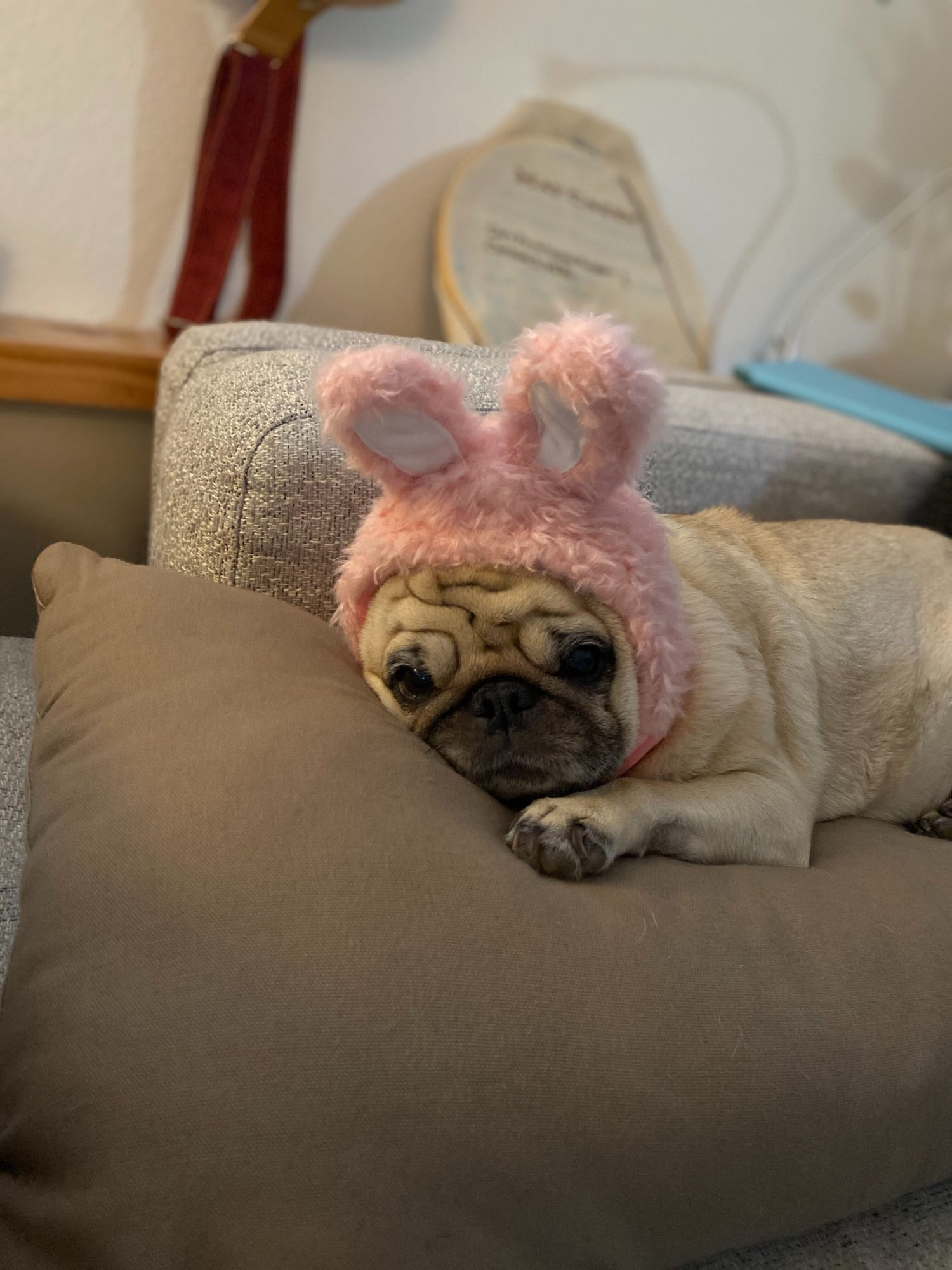 Listen, dressing up and eating tons of sugary sweets is fun until it isn't. The toothache, the sugar crash, and the inevitable exhaustion after all the trick or treaters finally leave means some of us—most of all this pug who is cleverly disguised as a bunny—are over it. Time to put away the pumpkins and get ready for Turkey Day!RELATED: Tips to Make Thanksgiving Safer for Your Pets This Holiday Season