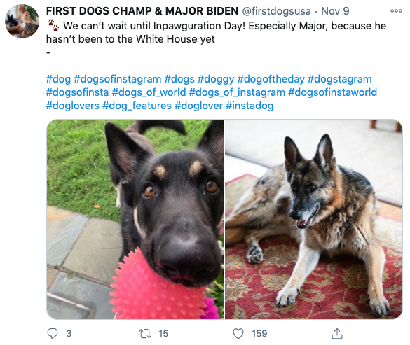 Screenshot of Biden dogs Champ and Major Twitter fan account