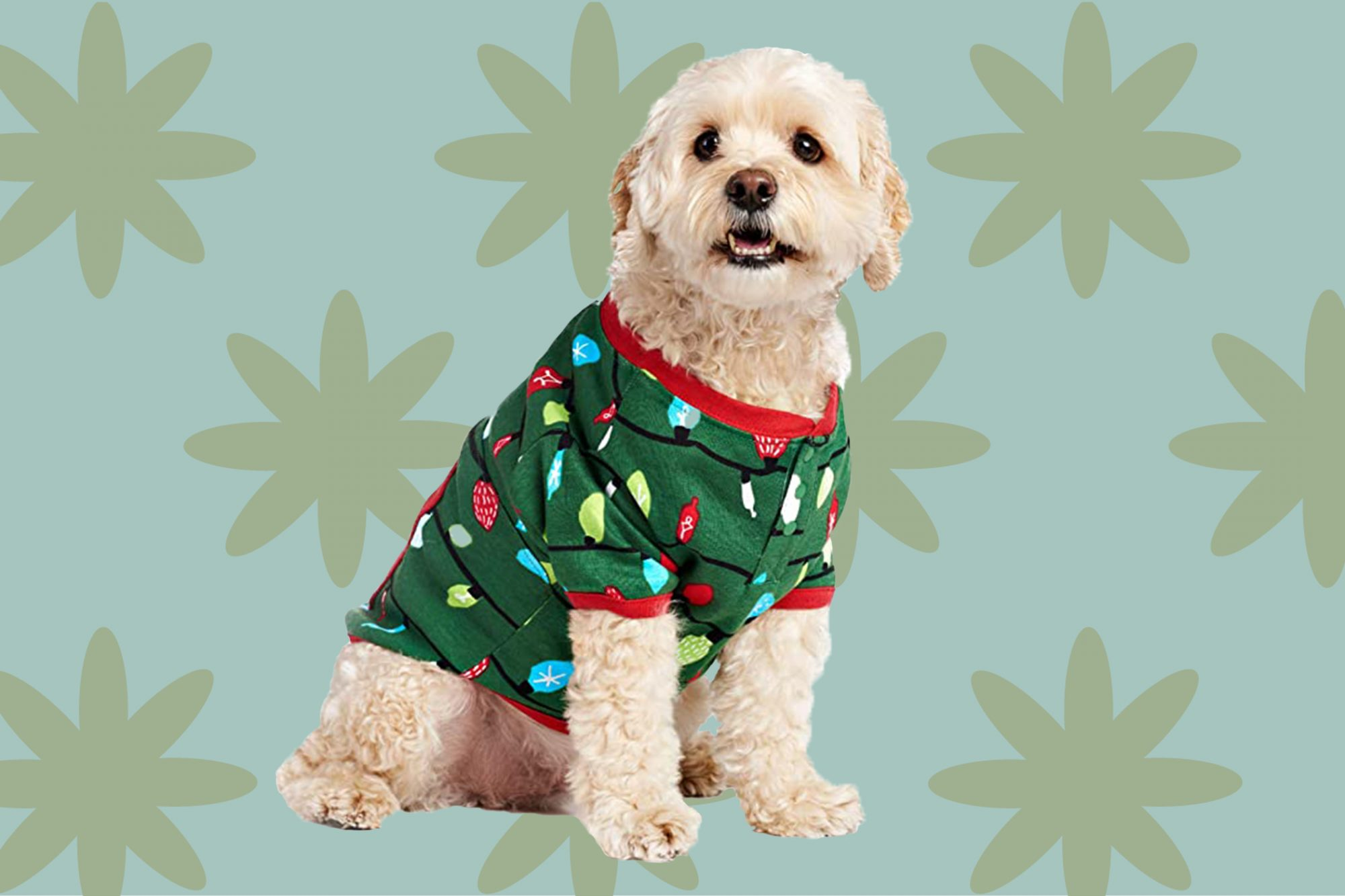 small curly-haired dog sits down in a green pajama top decorated with printed christmas lights
