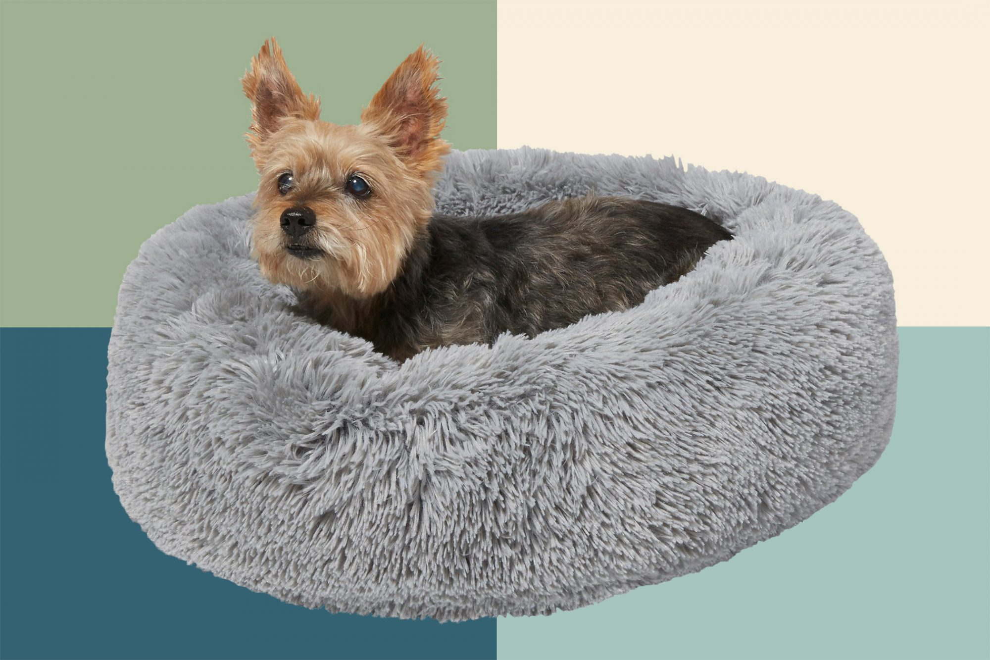 Yorkie in pet bolster bed